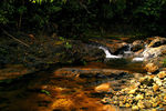 Title: Tropical Water Stream