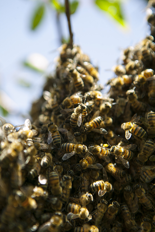 bees group
