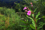 Title: Wildflowers at the gorge