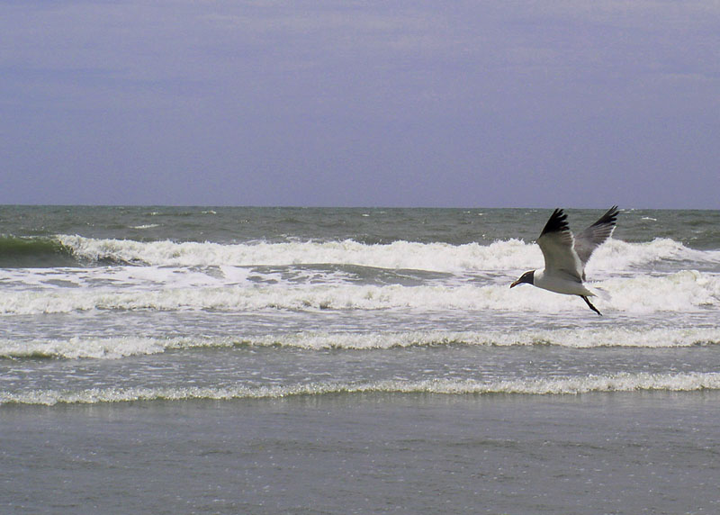 Windy day at the beach