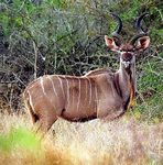 Title: My first Kudu