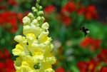 Title: bumble-bee and a flower