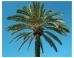 Title: Perfect Palm