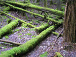 Title: Moss_on_logs