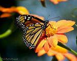 Title: First Monarch