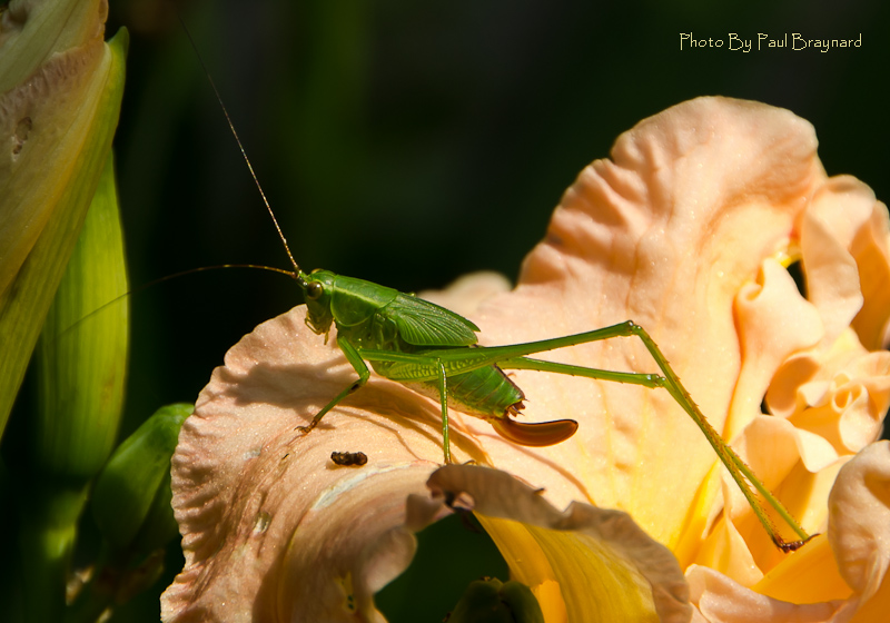 Bug on a Lily