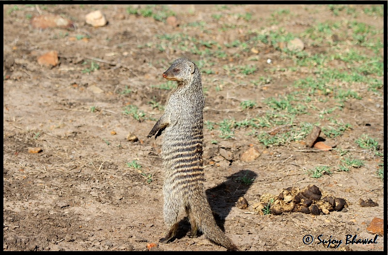 Mongoose..