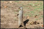 Title: Mongoose..