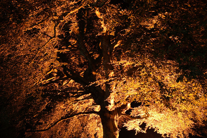 Floodlit tree