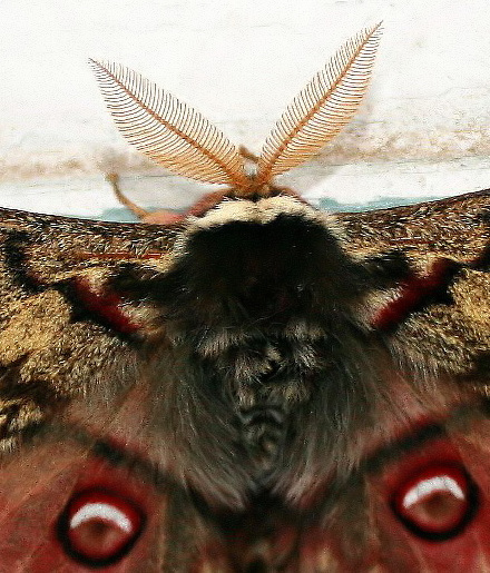 A Close View of a Butterfly