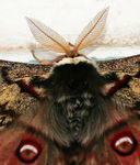 Title: A Close View of a Butterfly