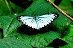 Title: Butterfly on the green leaves...