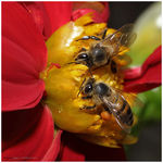 Title: Killer Bees