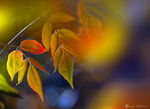 Title: early morning autumn
