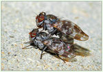 Title: Rock flies in Rock and Roll
