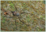 Title: Tree trunk spider
