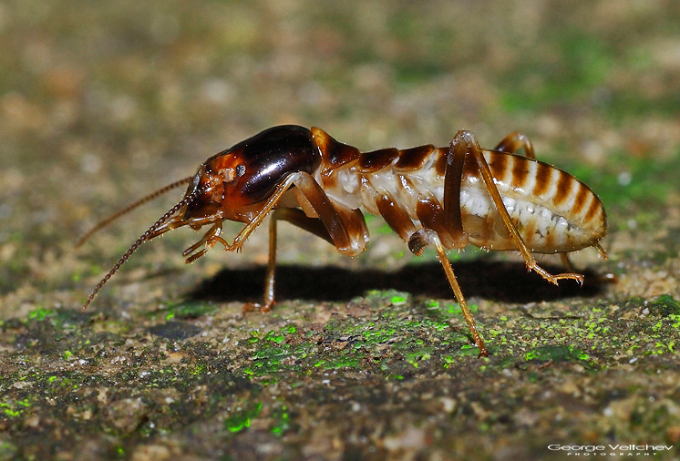 Termite - first for TN