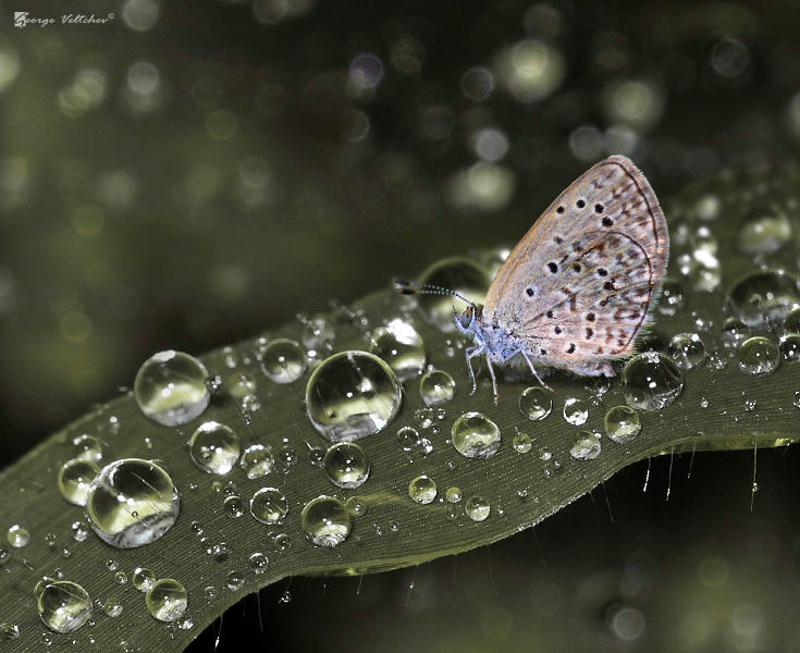 topaz blue & dew droplets