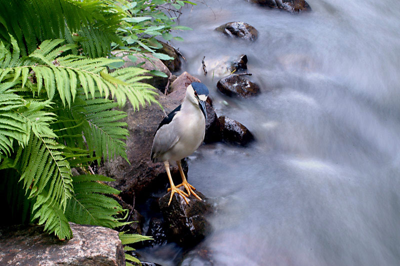 Smooth water and heron