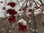 Title: Ice berries
