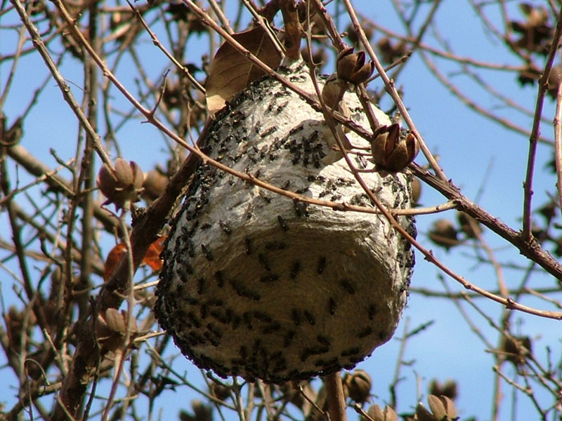 Wasp House