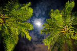 Title: Tropical moon