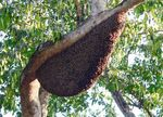 Title: Bee Hive