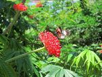 Title: A Butterfly on a Red FlowerCanon PowerShot SD1200 IS