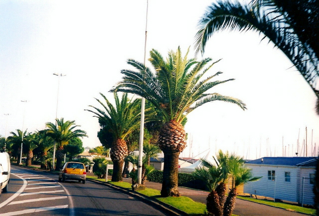 New Sort of Palm Trees