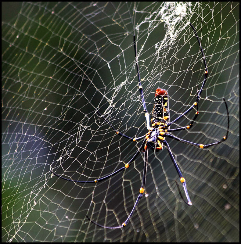 Mysterious Spider