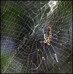 Title: Mysterious Spider