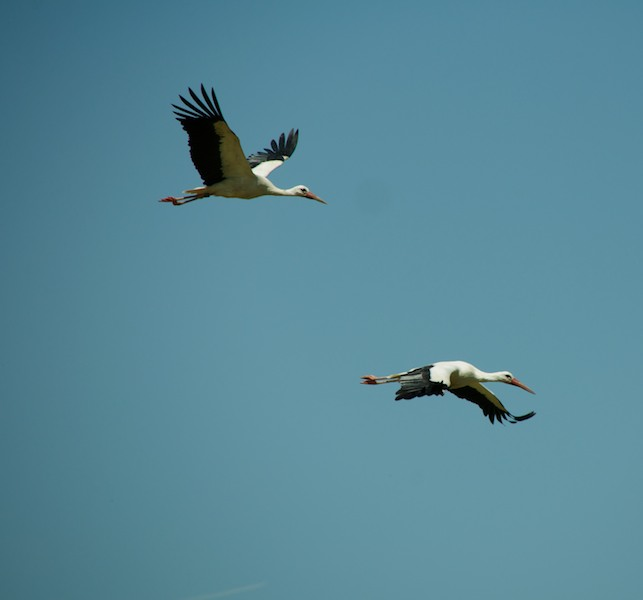 the flight of the storks