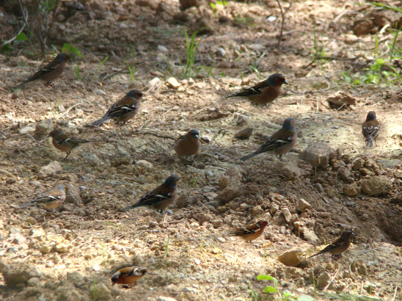 A group of finch