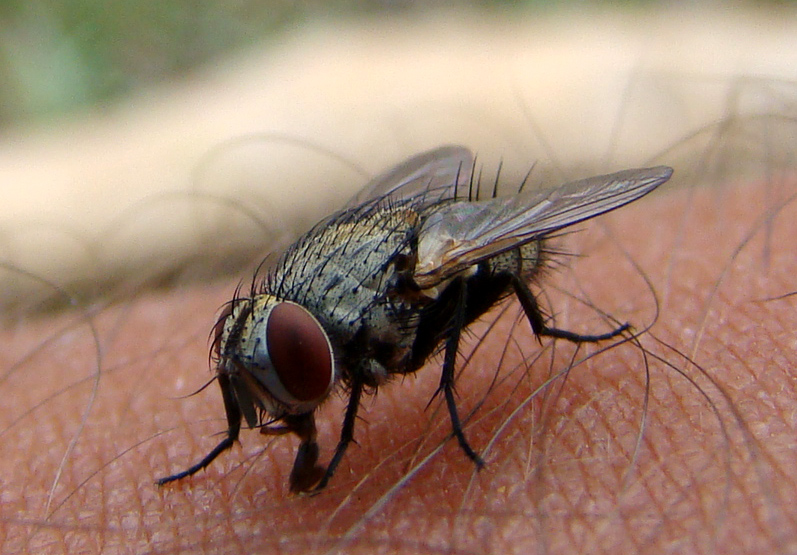 The fly on my arm