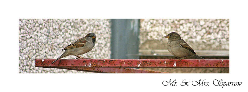 Mr. and Mrs. Sparrow