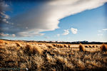 Title: High desert grasses