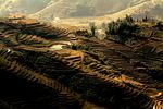 Title: Rice Fields of SaPa, Vietnam