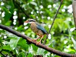 Title: Indian PITTA