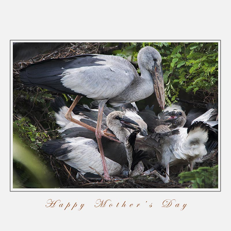 *****HAPPY MOTHER'S DAY*****