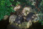 Title: Turtles (Emys orbicularis) in Nesebar