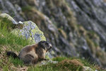 Title: The marmot in Tatra
