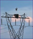 Title: High Wire Act