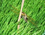 Title: Dragonfly in the Wind