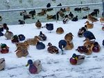 Title: Ducks on the first snow