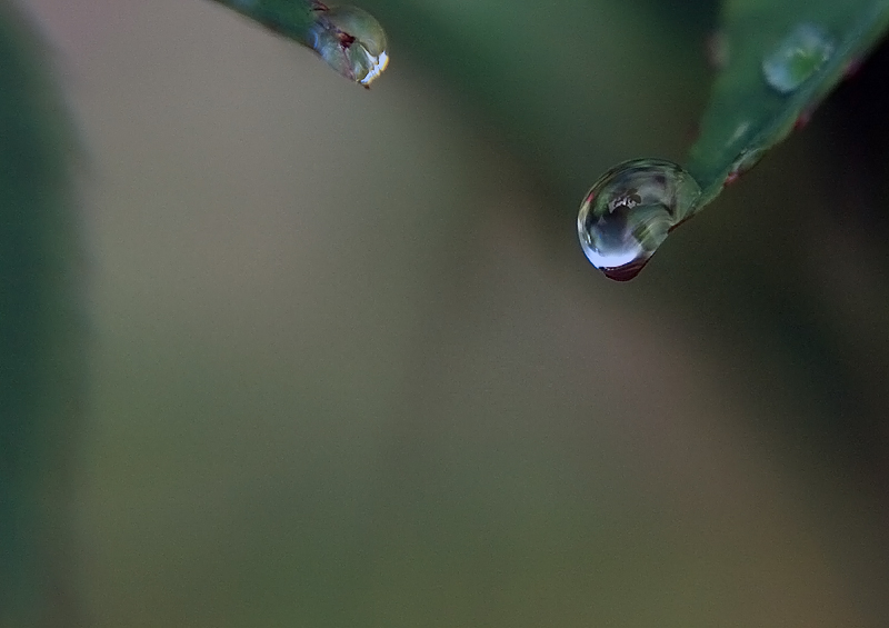 One drop of fresh water