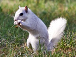 Title: White Squirrel-119