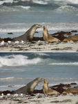 Title: seal it with a kiss