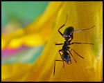 Title: Ant