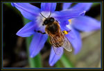 Title: Bee