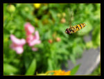 Title: Hover fly